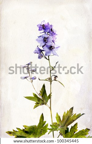 Illustration of watercolor delphinium on a vintage background - stock photo