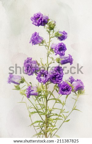 Illustration of watercolor Lilac campanula on a vintage background