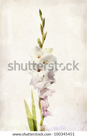 Illustration of watercolor white gladiolus on a vintage background - stock photo