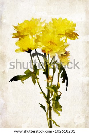 Illustration of watercolor yellow chrysanthemum on a vintage background - stock photo