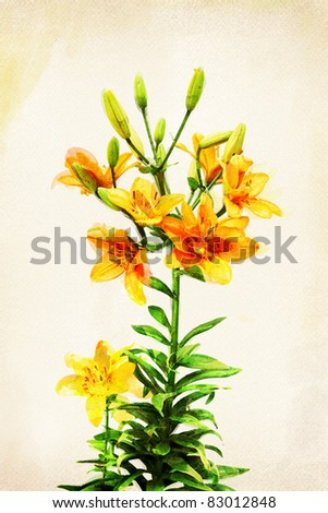 Illustration of watercolor yellow lily on a vintage background - stock photo