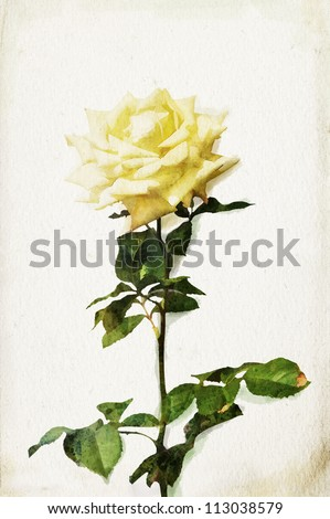 Illustration of watercolor yellow rose on a vintage background - stock photo