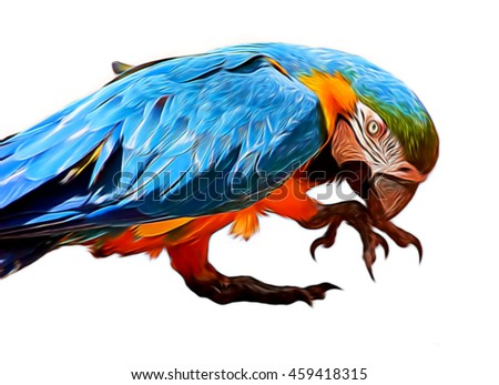 Illustration  parrot Blue-and-yellow macaw  close up  isolated on white                   - stock photo