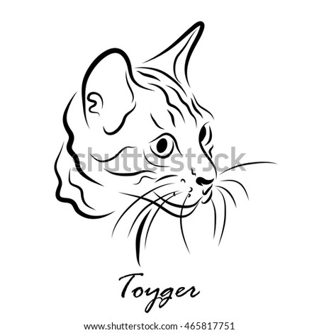 Illustration shows a cat breed Toyger