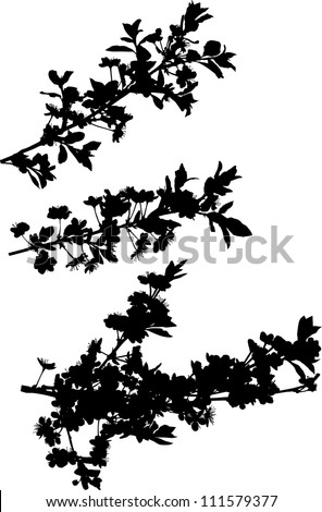 illustration with cherry tree flowers silhouette on white background
