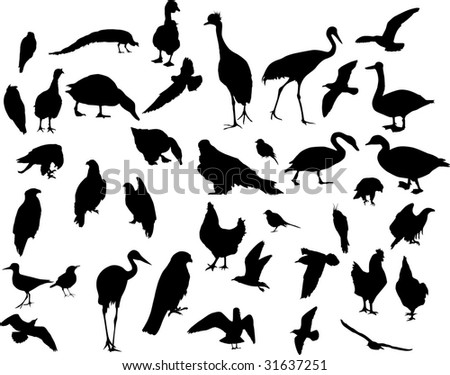 illustration with different bird silhouettes