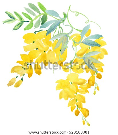 Illustration with realistic watercolor. Tropics. Beautiful bouquet with tropical flowers and plants on white background. Yellow wisteria.