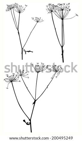 illustration with set of dry autumn plants isolated on white background