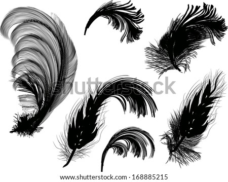illustration with six feathers isolated on white background