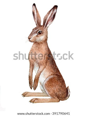 illustration with watercolor on paper. Isolated European hare - stock photo