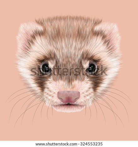 Illustrative portrait of Ferret. Cute face of typical ferret coloration, known as a sable ferret.