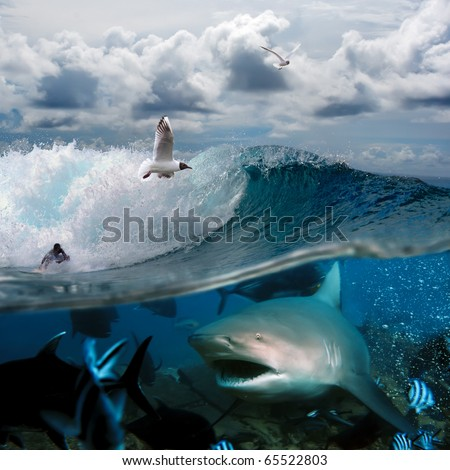 image about the ocean and the surfer on the wave of a cloudy sky over him with the flying seagulls and angry hungry shark - stock photo