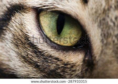 Image cat eye closeup  - stock photo