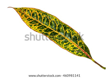 Image closeup of colorful leaf with isolated background