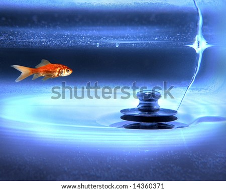 image composite of a goldfish and a drain - stock photo