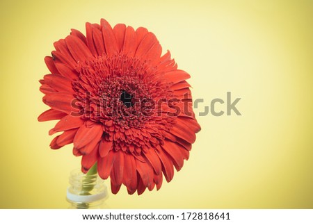 image if a red flower and plastic bottle on an isolated background