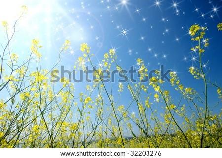 Image image of flower - stock photo