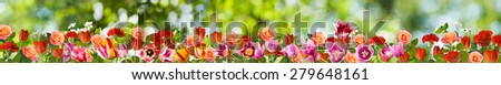 image many flowers in the garden - stock photo