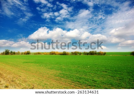 image of a beautiful green field with sprouting grains - stock photo