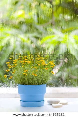 Image of a beautiful yellow floral bouquet in window sill - stock photo