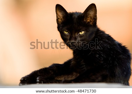 Image of a black cat with stone castle background. - stock photo