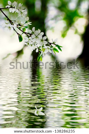 image of a blossoming apple-tree branches on a  water background - stock photo