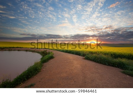 Image of a canola field at a dam on a farm in the republic of South Africa