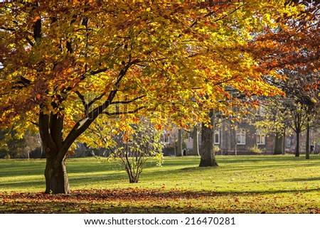 Image of a colourful park in autumnal bloom.