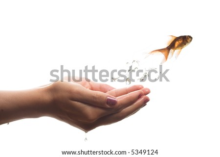 image of a goldfish jumping out of hand - stock photo