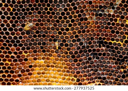 Image of a honeycomb in close-up with a working bee suitable for background.