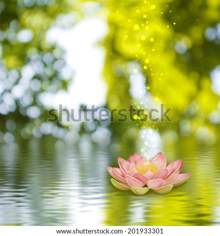 image of a lotus flower on the water against  green background - stock photo