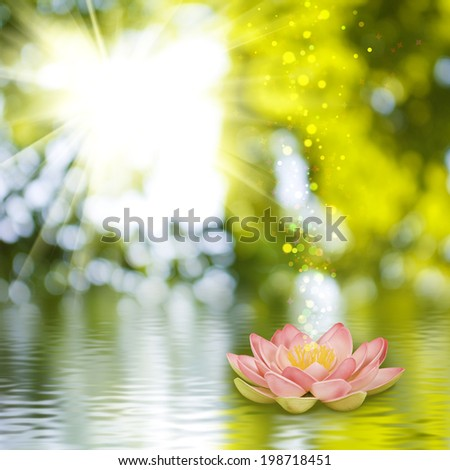 image of a lotus flower on the water against  the sun background - stock photo