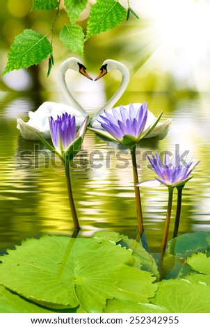 image of a lotus in water and swans - stock photo
