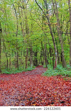 Image of a nature trail in a colourful vibrant forest as autumn approaches - stock photo