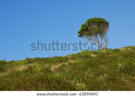 Image of a nice tree alone in a meadow. - stock photo