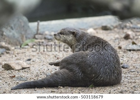 Image of a otter on nature background.