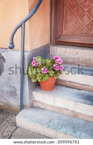Image of a potted plant at the front of a house.