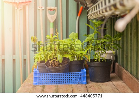 Image of a potting table with plants and tools.   - stock photo