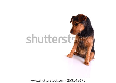 Image of a sad dog in a seated position. Image is isolated on white - stock photo