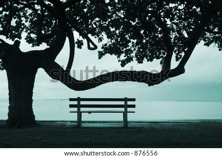 Image of a tree & park bench - stock photo