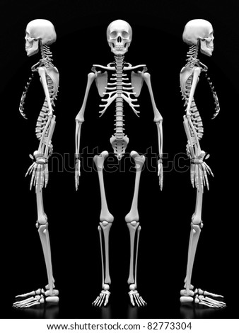 image of a white, a human skeleton on a black background - stock photo