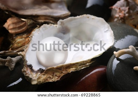 Image of a white pearl in the shell on wet pebbles. - stock photo