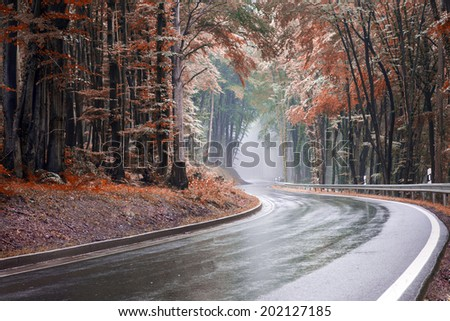 Image of a winding road through a forest  leading into a tunnel of fog edited in autumn colours with a toned look - stock photo