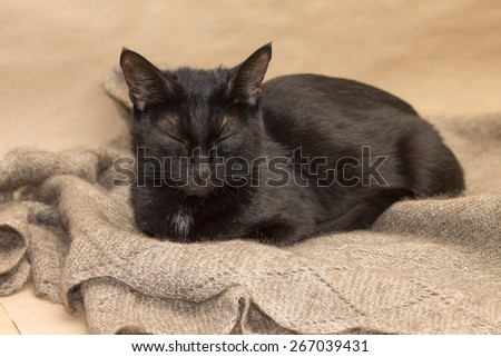Image of adorable black cat basking on warm woolen shawl - stock photo