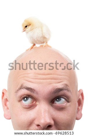 Image of bald male head with a small chick - stock photo