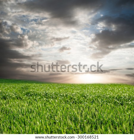 image of beatiful summer or spring wheat field and sky with clouds - stock photo