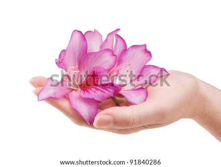 image of beautiful female hand with flower isolated on white - stock photo