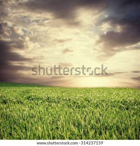 image of beautiful summer or spring landscape and sky with clouds toned in vintage style - stock photo