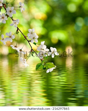 image of blooming branch over the water closeup - stock photo