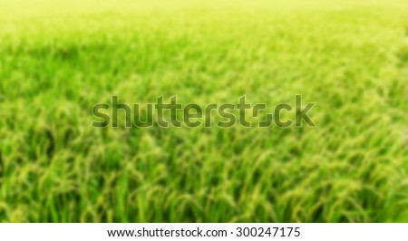 image of blurred rice plantation  - green agriculture field meadow grain farmland water growth farming - stock photo